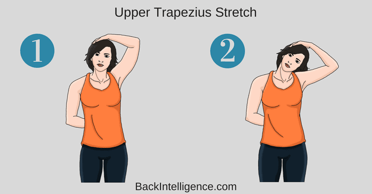 Upper trapezius and Scalene Stretch