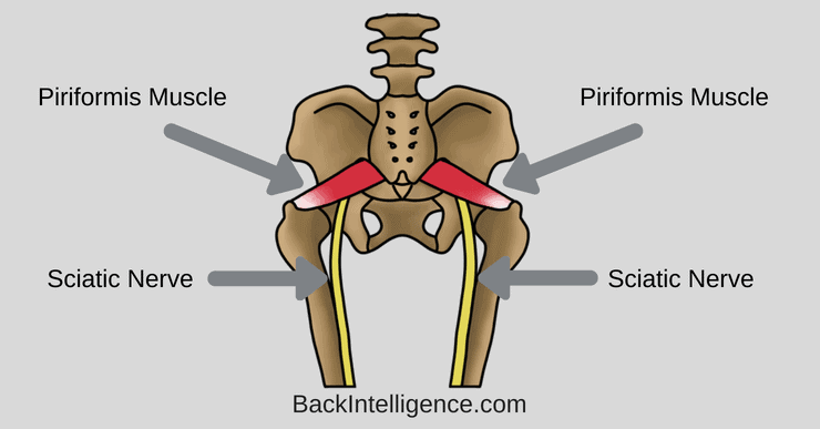 Piriformis muscle exercises image